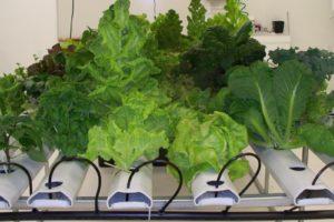 best indoor garden starter system