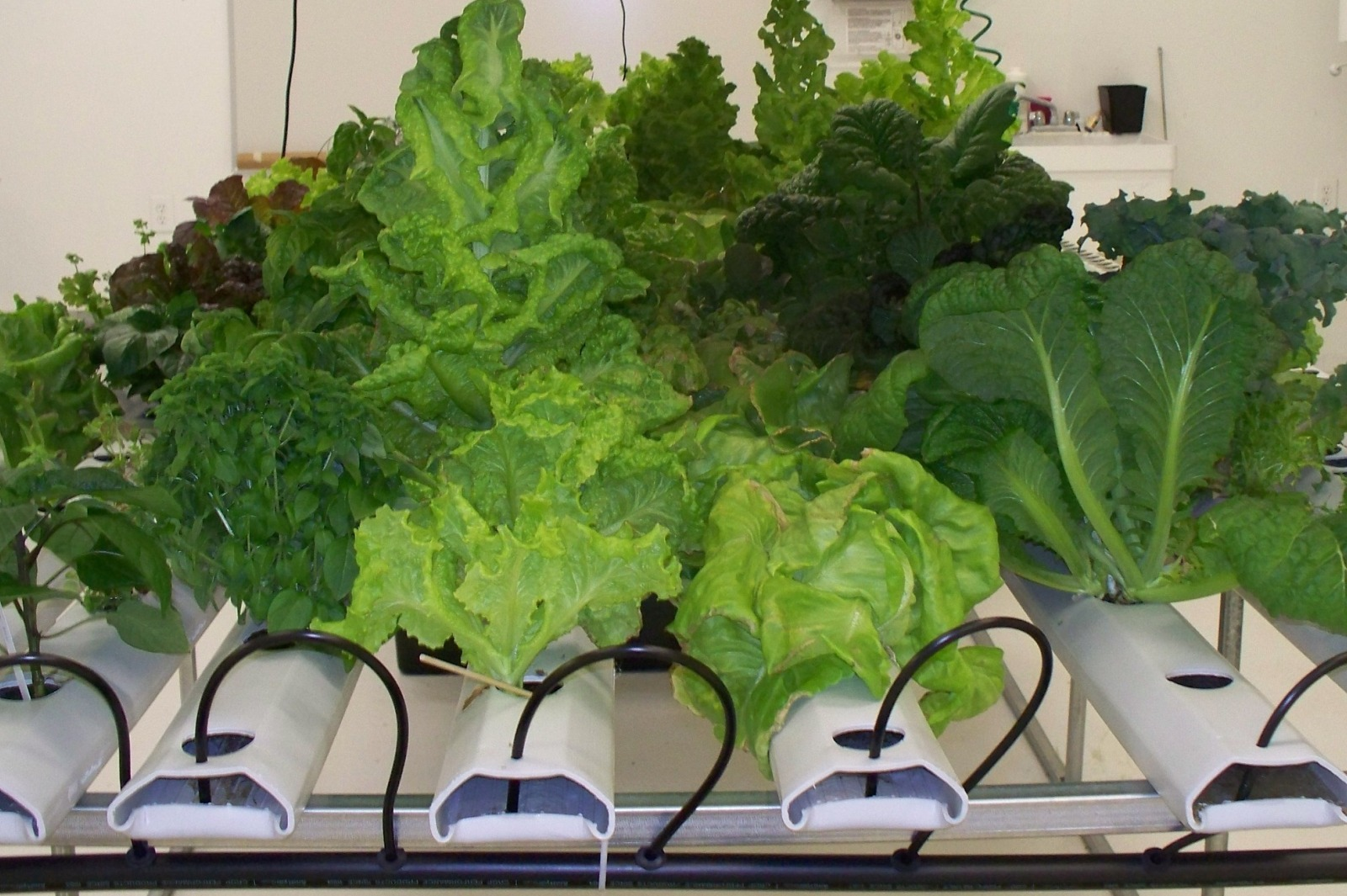 best indoor garden starter system