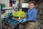 Growing Food in Space