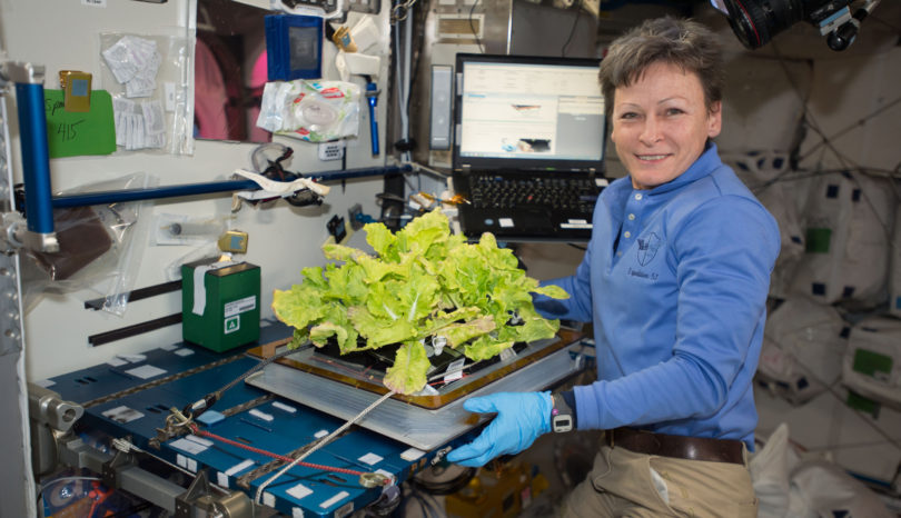 NASA astronaut Peggy Whitson harvested another crop of Tokyo bekana cabbage on the International Space Station.